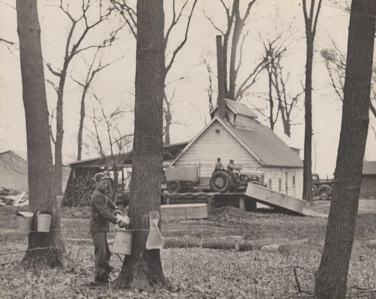 Funks Grove Pure Maple Sirup; Stephen C. Funk in the foreground, circa 1950. The business was established by Arthur Funk in 1891 and moved to this (its current) location by Hazel Funk Holmes in the 1920s. The sugarhouse pictured was built in 1930.